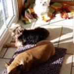 teddi-bear-day-care-tupper-plains-puppies